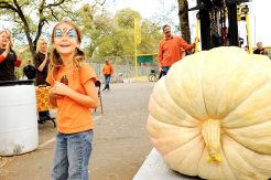 With a pumpkin weighing 1,061 pounds, seven-year-old Audry Warren wins the Open Category in the Giant Pumpkin Contest at the 12th Annual Auburn Community Festival, beating out her nearest opponent by 173 pounds and shattering the previous record. (Auburn CA, 2008)