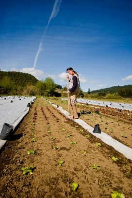 """Horton Road Organics staff member Jena Botte works through rows of lettuce, """"timely hoeing"""" the young heads, which helps prevent weeds from growing. It is one sustainable technique used at the farm in place of more traditional farming practices that rely on pesticides. (Blachly OR, 2007)"""