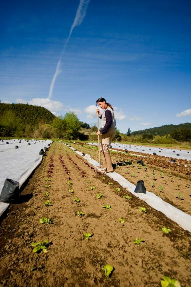 "Horton Road Organics staff member Jena Botte works through rows of lettuce, ""timely hoeing"" the young heads, which helps prevent weeds from growing. It is one sustainable technique used at the farm in place of more traditional farming practices that rely on pesticides. (Blachly OR, 2007)"