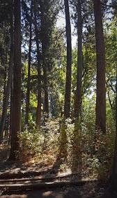 2018-09-19_Lower Bidwell Park 2